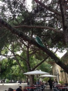 A Peacock Hiding in a Tree Photo Taken By Jennifer Mitchell