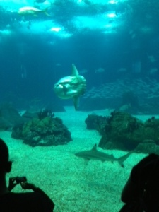 Photo Taken by Jennifer Mitchell The Famous Sun Fish