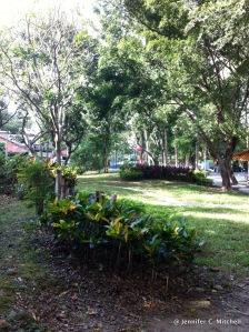Our neighborhood park