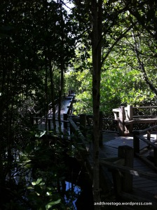 The walkway through the mangroves