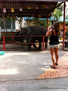 Our friend, Laura, taking a picture of Song Kran, the youngest elephant at Hutsadin Elephant Foundation